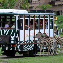 Bali Safari Marine Park (11)
