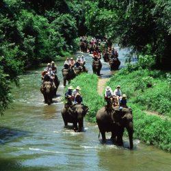 Elephant Ride (3)