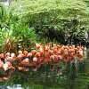 싱가폴 주롱 새공원-5