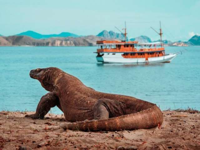 Private 4 Day Komodo Sail on Board with Phinisi Boat & Snorkeling Tour 5